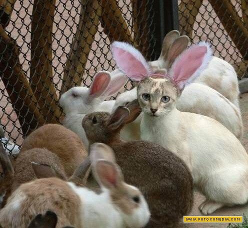 gato-por-lebre