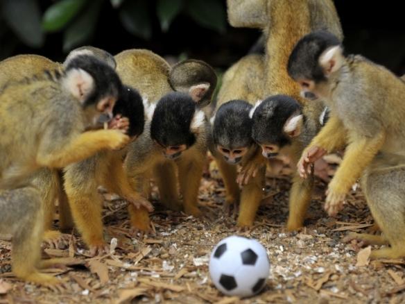 AFP-futebol-macaquinhos-f1-TL